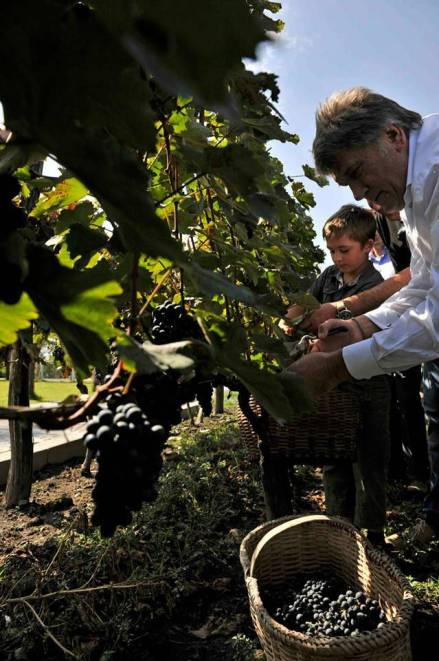 the-ex-president-of-ukraine-viktor-yushchenko-helped-with-the-grape-harvest